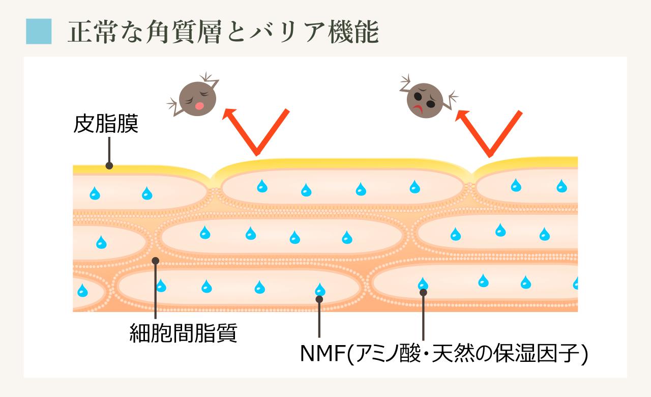 正常な角質層には細胞間脂質、NMFが存在し、皮脂膜におおわれる