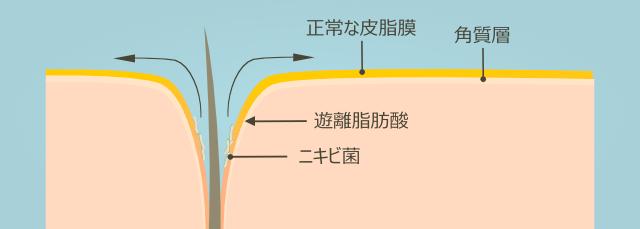 正常な皮膚の皮脂膜