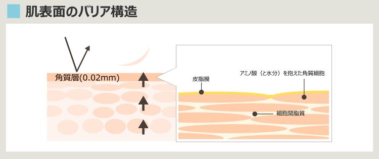 肌表面のバリア構造