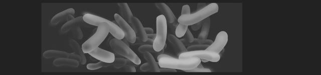 ニキビ菌(P.acnes)