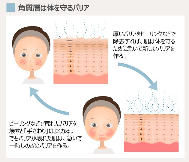 肌 の ターン オーバー 促進