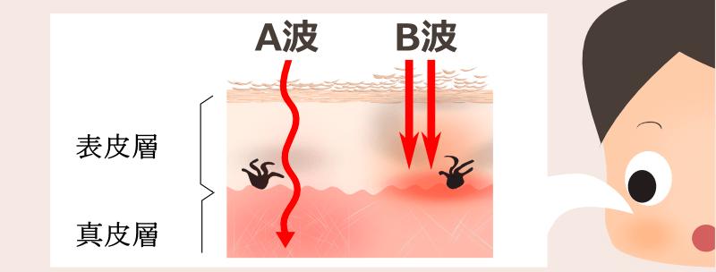 紫外線A波、B波による皮膚への刺激